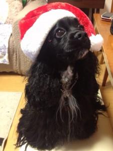 サンタ帽のアリエル
