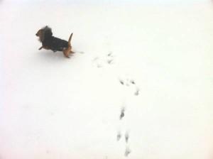 雪であそぶさくら