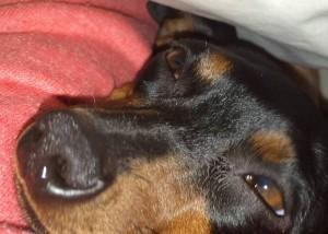 犬だって鼻水ズルズル。 多分むずむずしてますよね。