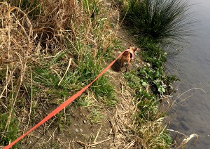 大好きなお散歩コースの河原。 虫やダニが潜んでいます…。 でもこういうところが大好き!