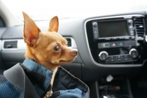 車の中ではキャリーで静かに。 その辺の心得は、また改めて。