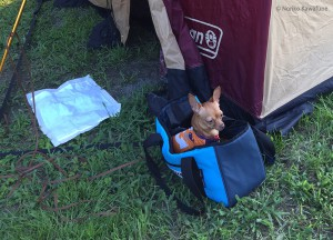 テント入り口にトイレシート設置。 寝ている時催しても安心レイアウト。