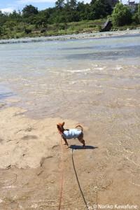 ビーチじゃないです、川ですよ! 夏は川をじゃぶじゃぶするのが好き。