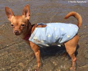 冷え冷えベスト着用で川の中。 真夏のお散歩はこれで安心!