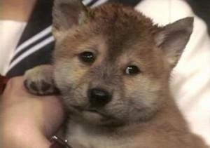 犬の涙 2